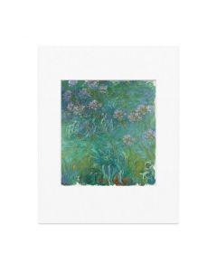 Monet: Agapanthus Matted Print