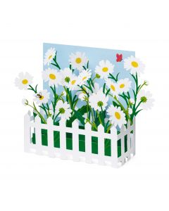Picket Fence Daisies Pop-Up Note Cards - Set Of 6